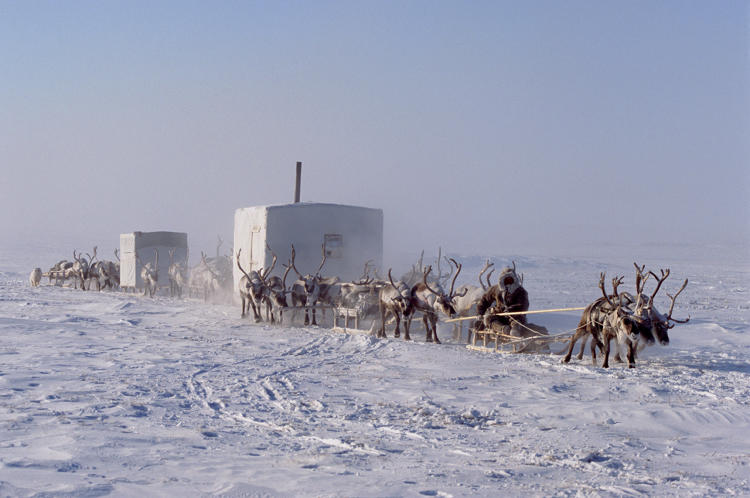 <p><strong>SANTA STYLE.</strong>  Such an inhospitable place for humans is nonetheless home to some. The nomadic Dolgan people of northern Siberia, where temperatures drop to a bone-chilling –76º F, depend on reindeer for survival – as food, clothing, hut liners, and transport. Every week, they move to find new pastures for their animals, taking their homes with them.</p>
