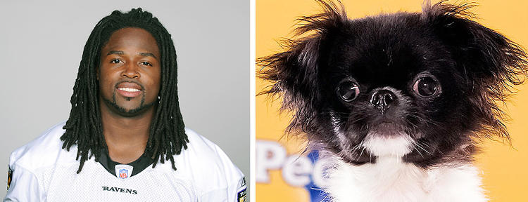 <p>Name: Torrey Smith <br /> Breed: Ravens <br /> Age: 24<br /> Position: Wide Receiver</p>  <p>Name: Simba<br /> Breed(s): Japanese Chin<br /> Age: 8 weeks<br /> Adoption Organization: Tails of Love Animal Rescue</p>  <p>Analysis: Smith is described as a deep threat for the Ravens. But one look at Simba's two pounds of sheer attitude and balls start dropping up and down the field.</p>