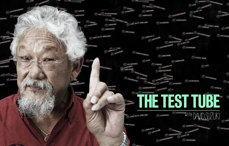 <p><em>The Test Tube With David Suzuki </em>combines a conventional documentary with real-time Twitter interaction.</p>