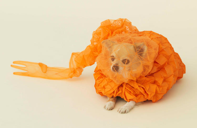 <p>Reiser + Umemoto designed this &quot;cloud&quot; to follow the Chihuahua around. It serves many functions, bulking them up, keeping them warm and, when attaching to a leash, giving the owner visual feedback of where their pulling is affecting the dog.</p>