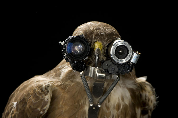 <p>He's also used parts from an old scanner/printer to create a bionic bird.</p>