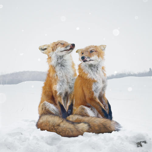 <p>Simen Johan's <em>Untitled (#136)</em>, one of a handful of works on view this winter at Brown University's Bell Gallery.</p>