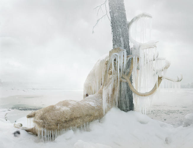 <p><em>Untitled #159 </em>shows a caribou, antlers fused to a tree with ice.</p>