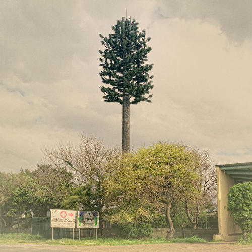 <p>Cape Town, where Marsh shoots, has a rather complex history with these things. The first tree tower, a palm, was installed in the city in 1996.</p>