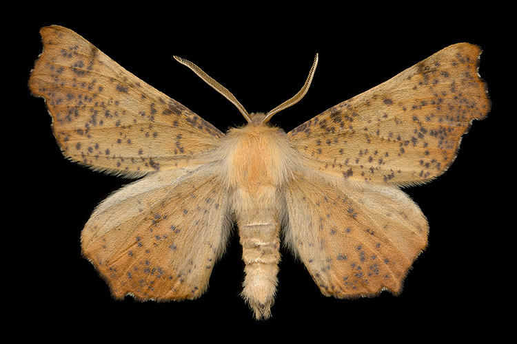 <p>He moved onto moths some eight years ago, when he realized the local terroir had many more colorful and varied specimens to offer.</p>