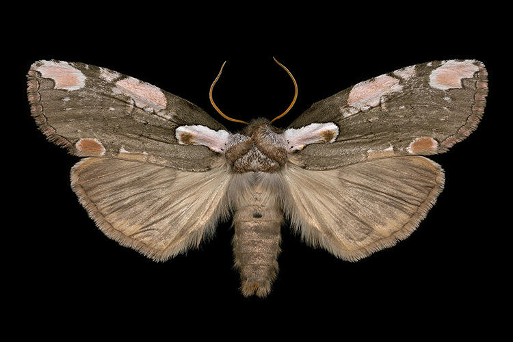 <p>He'd wait for hours through the night before catching his moths and driving back home.</p>