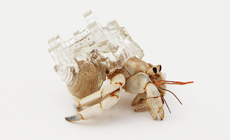 <p>Hermit crabs are becoming increasingly homeless, as natural shells become more and more infrequent to come by on the ocean floor.</p>