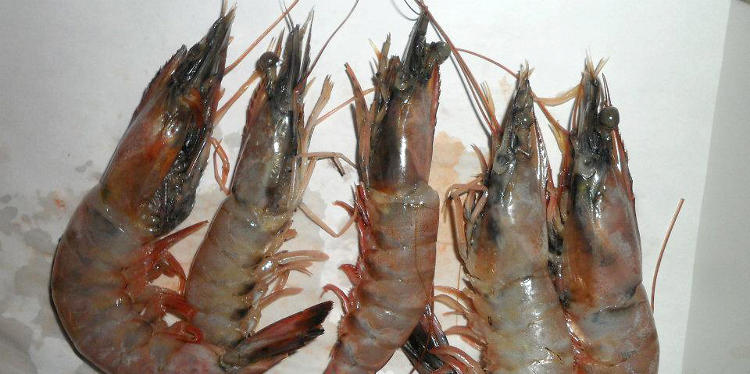 <p>Would you like some shrimp? Delicious!</p>