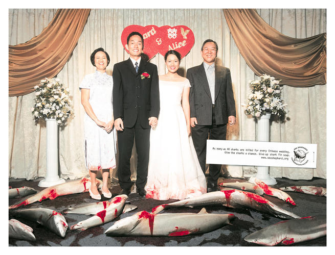 <p>&quot;As many as 40 sharks are killed for every Chinese wedding. Give the sharks a chance. Give up shark fin soup.&quot;</p>