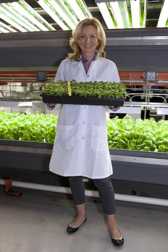 <p>The plan is to supply up to a million pounds of greens annually, mostly to stores like Whole Foods, but also to local restaurants.</p>
