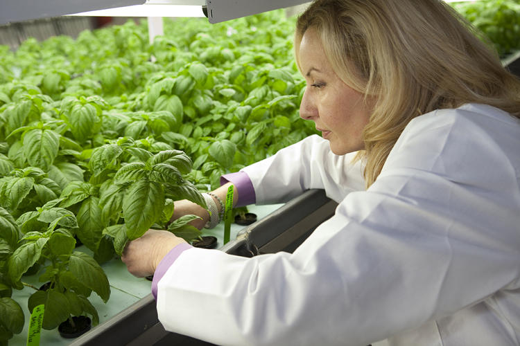 <p>This new 90,000-square-foot green-growing factory from a company called FarmedHere is located about 15 miles from downtown Chicago.</p>