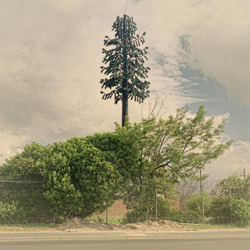 <p>Photographer Dillon Marsh documents the cell phone towers posing as trees in his native South Africa.</p>