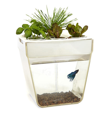 <p>The AquaFarm grows small batches of wheatgrass, basil and lettuce atop a fishbowl containing a more decorative, for-demonstration-purposes-only beta fish.</p>