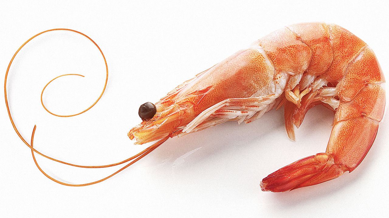 Are Shrimp Shells The Future Of Solar Cells? | Co.Exist | ideas ...