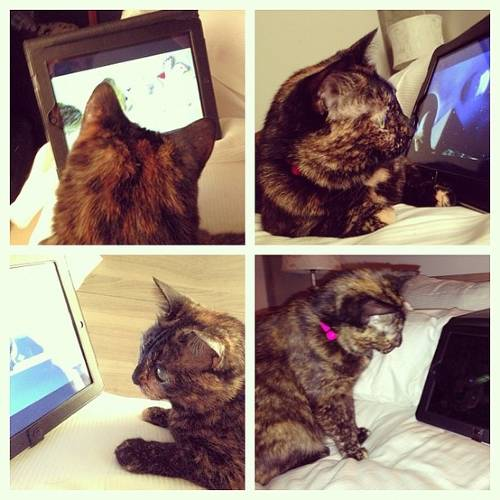 <p>Via <a href=&quot;http://catmoji.com/pic/eh/our-tortie-pal-ava-from-instagram-checking-out-the-different/&quot; target=&quot;_blank&quot;>Miaow.ie Dotie</a></p>