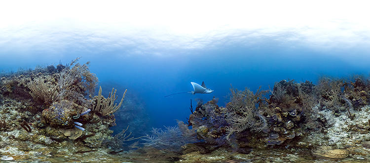 <p>By the end of 2014, the Record will have data and images for approximately 300 coral reefs.</p>