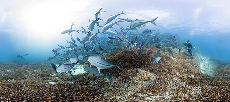 <p>According to NOAA, fish that grow on coral reefs provide food to 1 billion people, and 85% of those fish-eaters rely on the fish as their main protein source.</p>