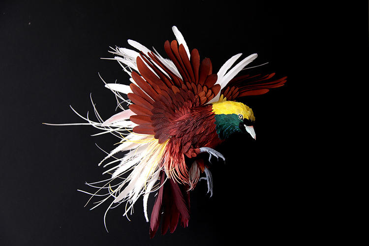 <p>Greater bird of paradise</p>
