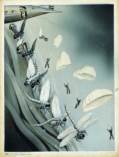 <p>&quot;The unfolding of insect wings.&quot;</p>