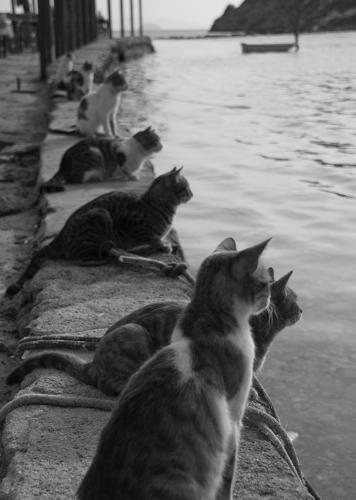<p>Not entirely immune to Internet memes, Colossal will even throw cat lovers a bone: &quot;Love <a href=&quot;http://www.thisiscolossal.com/2013/10/cats-waiting-for-fishermen-to-return/&quot; target=&quot;_blank&quot;>this photo</a> of what appears to be cats waiting for fishermen to return to port.&quot;</p>