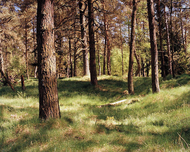 <p>Tip: Behind the piece of wood on the ground, near the second tree to the right in the center of the image.</p>