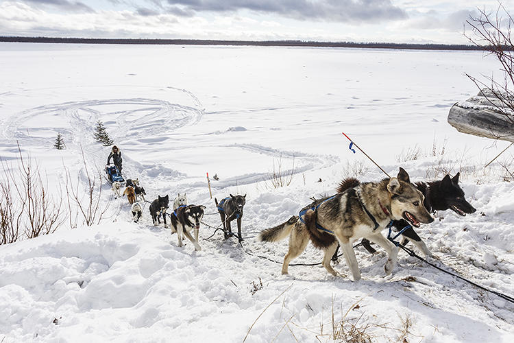 <p>Nearly 70 mushers from around the globe and their teams of canine athletes departed from a frozen lake in Anchorage.</p>