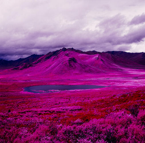 <p>New York–based photographer <a href=&quot;http://zvereff.com/&quot; target=&quot;_blank&quot;>Daniel Zvereff</a> recently got a hold of some of the last remaining stock of expired Kodak Aerochrome film in 120 format, and he took it to the Arctic.</p>