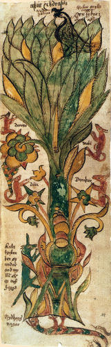 <p>Anonymous<br /> Yggdrasil Tree<br /> circa 1680<br /> The Arni Magnusson Institute Reykjavik</p>
