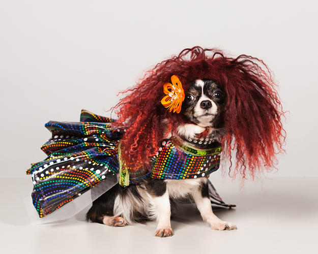 <p><em>Couture Dogs of New York,</em> by photographer Paul Nathan, captures the most extravagantly dressed pooches of the Big Apple. Athena wears Hec-lin Couture by Roberto Negrin.</p>