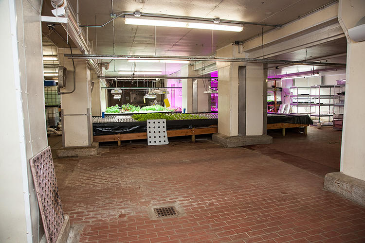 <p>A fish farm fertilizes plants, grow lights over salad greens provide waste heat for the building, and a new brewery will soon provide waste carbon dioxide to help plants grow.</p>