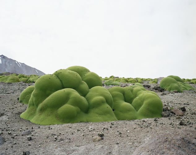 <p>This isn't a rock, it's actually moss from a Chilean desert, and it's been there for more than 2,000 years.</p>