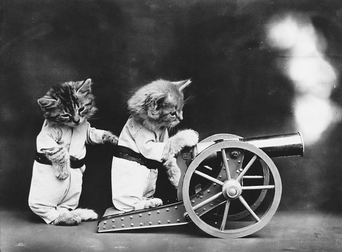 <p>Kitties and cannons.</p>