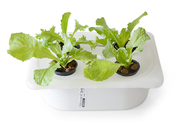 <p>If you want to use one of these architect-designed hydroponic gardens to grow vegetables in your apartment or office, you'll have to build it yourself.</p>