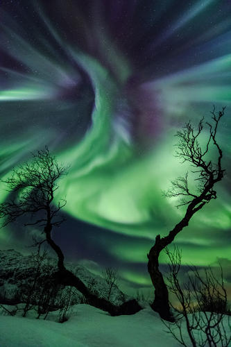 <p>On October 30th, a CME (Coronal Mass Ejection) hit Earth, displaying multi-colored auroras across the sky for most of the night in Kattfjordeidet, Tromsø, Norway. The old birch trees resemble arms reaching for the auroral corona appearing like a strange creature in the sky.</p>