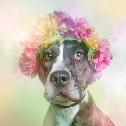 <p>And if you find yourself smitten, know that many of these animals are still up for adoption.</p>