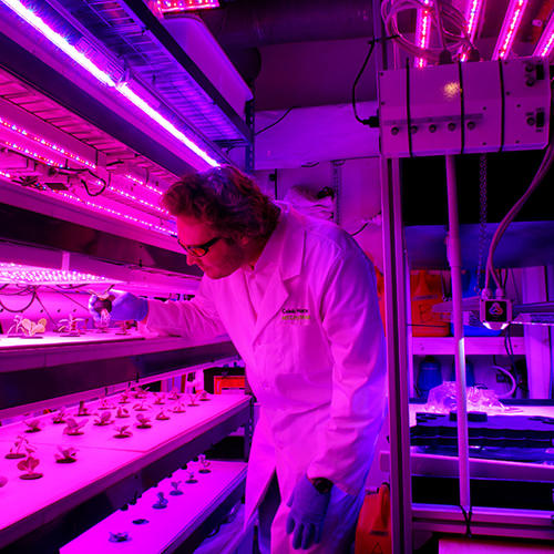 <p>Caleb Harper, a research scientist at the MIT Media Lab, hopes that the open-source CityFarms project can one day be replicated all over the world.</p>