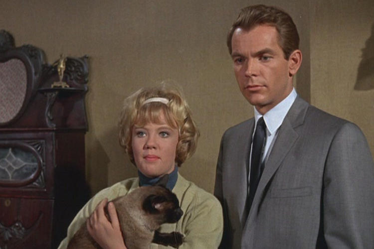 <p>The cat starring in <em>That Darn Cat</em> (1965) is only credited as &quot;D.C&quot; on IMDB.</p>