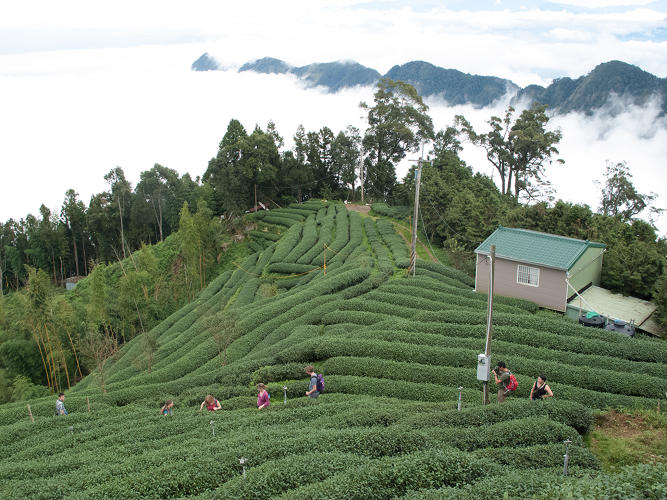 <p>Since founding the company in 1999 following a stint as a travel guide in Nepal, India, and Bhutan, Beckwith has worked to bring quality tea from &quot;origin&quot;--the blanket term used to describe where tea is grown--to American palettes.</p>