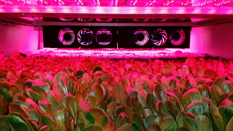 <p>A vacant steel factory in Newark is turning into the world's largest-producing vertical farm.</p>