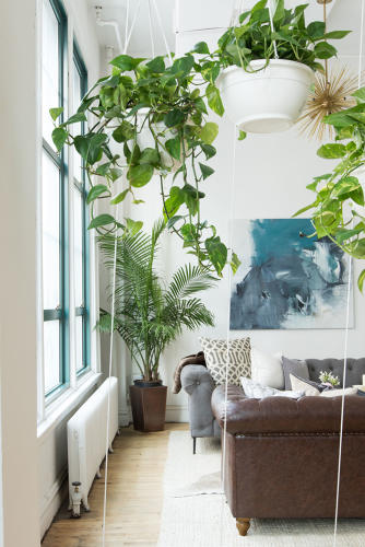<p>The plant wall acts as a living partition between the main lounge area and the rest of the office. It adds a touch of privacy but still feels open.</p>