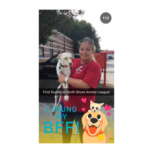 <p>The &quot;Animal Rescue&quot; live story showed snaps from new pet owners, as well as dogs and cats available for adoption.</p>