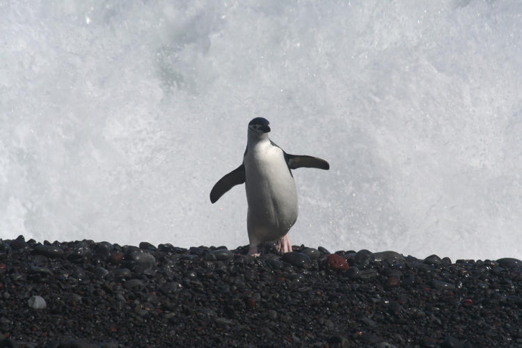 <p>The data can help scientists understand how different penguin colonies respond to challenges like climate change, commercial fishing, and tourists.</p>