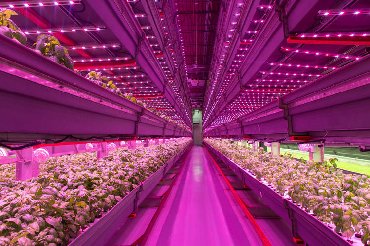 <p>Farmed Here uses a massive hydroponic system that pumps soybean- and kelp-infused water through a temperature- and humidity-controlled system.</p>