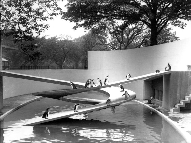 <p>Penguin Pool, London Zoo, London, 1934.</p>