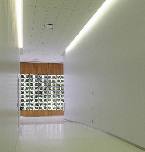 <p>Most green walls use soil, and may look pretty, but don't actually do much for air quality of the building.</p>