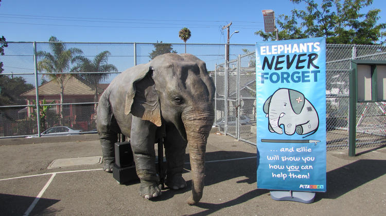 <p>Ellie the animatronic elephant campaigns against traveling circuses.</p>