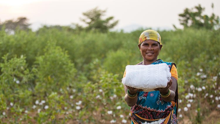 <p>The Chetna Organic collective employs 836 farmers and thousands of cotton pickers, like this woman.</p>