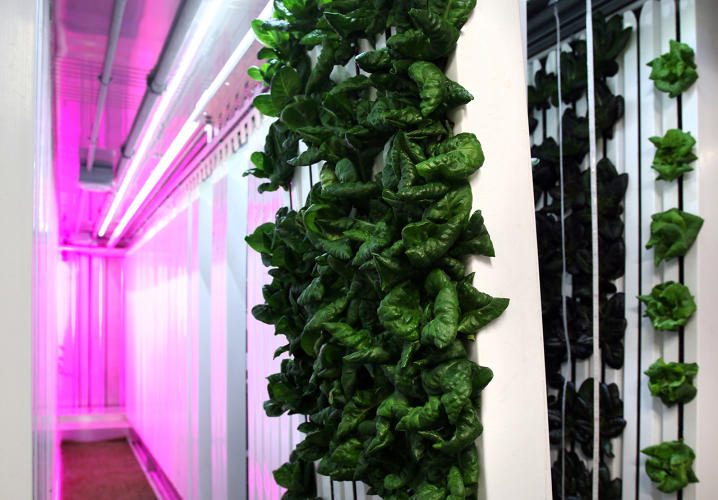 <p>The Square Roots campus will train new vertical farmers in a year-long accelerator program.</p>