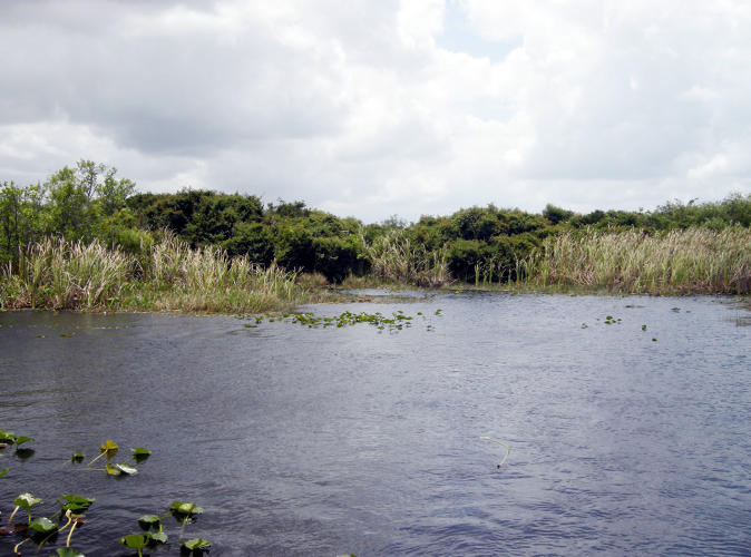 <p>In the low-lying Everglades, as sea level rises make the water more saline, freshwater species may not be able to survive.</p>