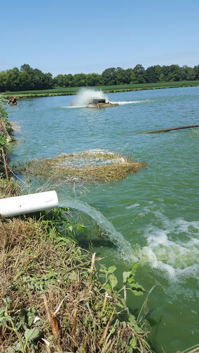 <p>There, they collect algae from the top six inches or so of the water column.</p>